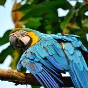 09. Papagalul Pepe