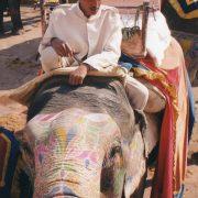 11. Elefant Colorat La Jaipur