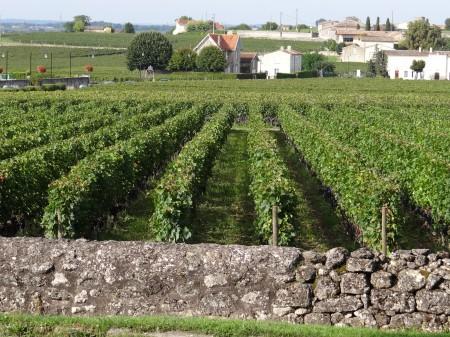 07. Podgorie Bordeaux - Franta