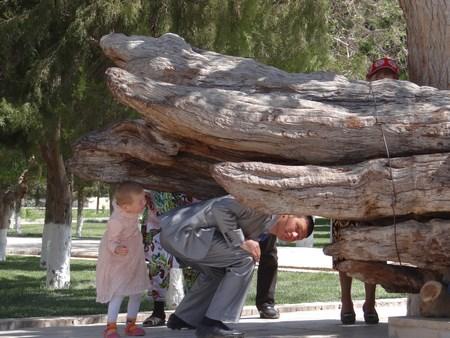 22. Copacul Sfant
