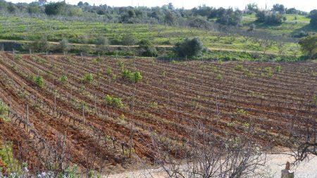 02. Podgorie in Algarve