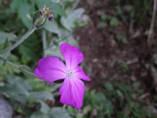 20, Flori de munte