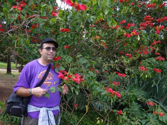 25. Flori din Brazilia