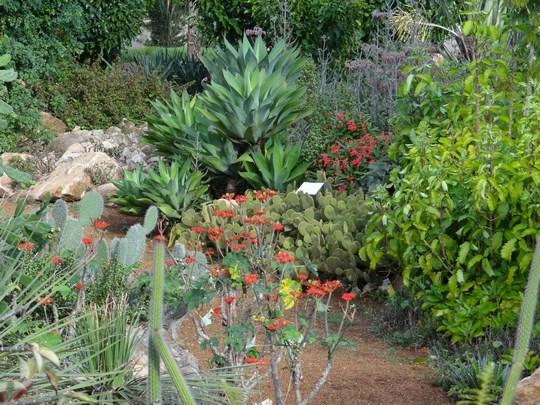 26. Cactusi