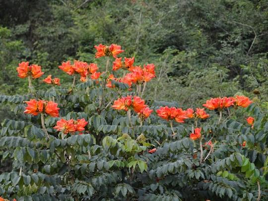 28. Flori Brazilia