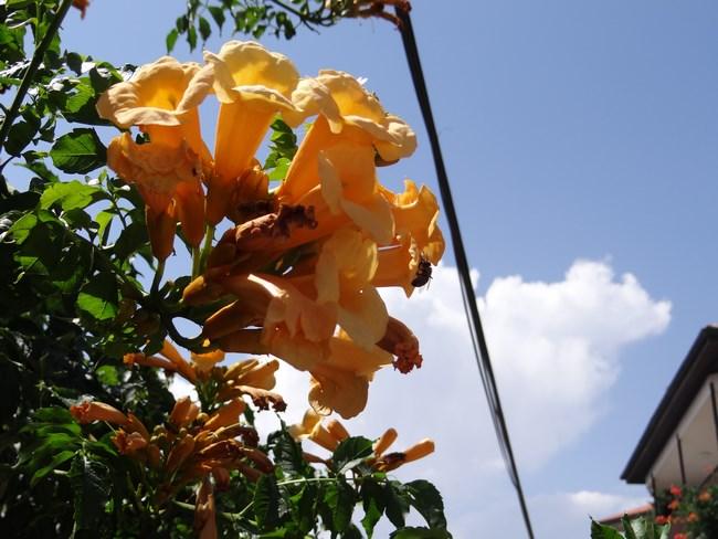 15. Flori din Ohrid
