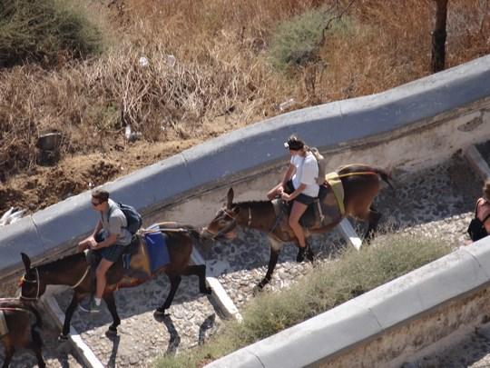 16. Magarii din Fira