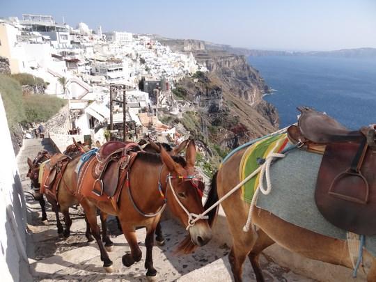 17. Magarii din Santorini