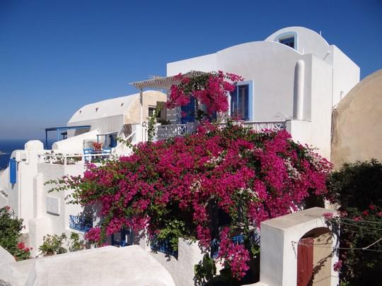 36. Flori in Santorini