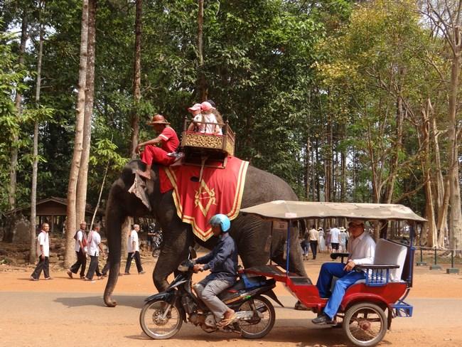 08. Elefant vs. tuk tuk