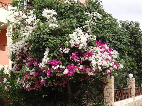 14. Santa Maria, Sal, Capul Verde