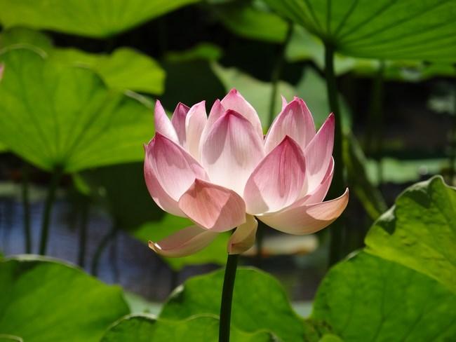 23. Floare Mauritius