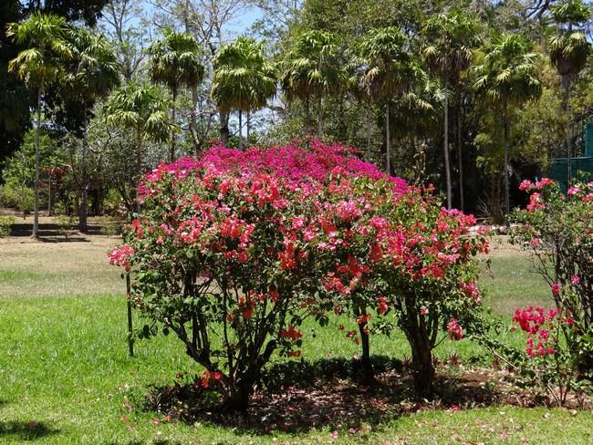 06. Flori Mauritius