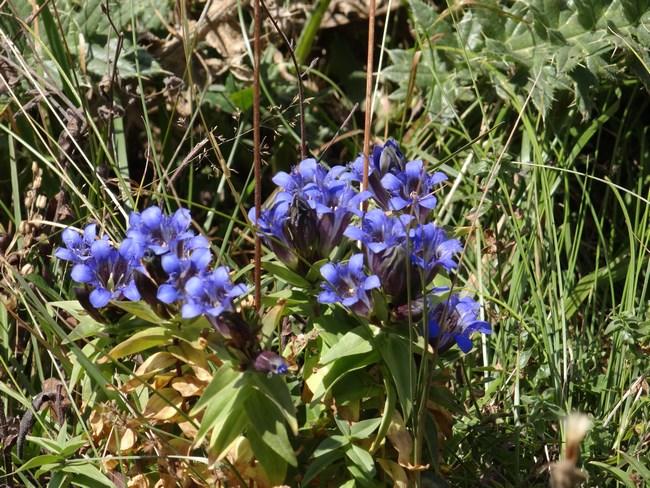 16. Flori in Caucaz