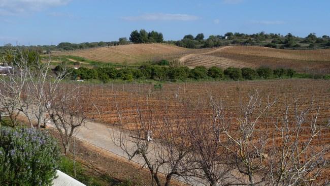 02. Vita de vie Algarve