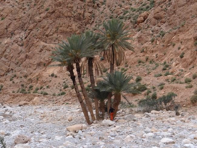 14. Palmieri in desert