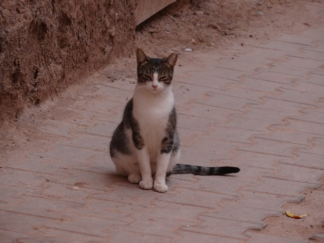 23. Cats of Ouarzazate