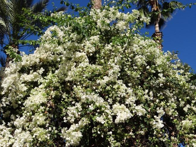 24. Flori albe