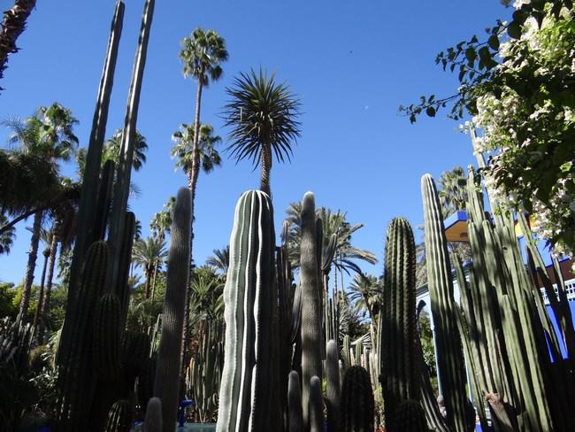 25. Palmieri in Marrakech