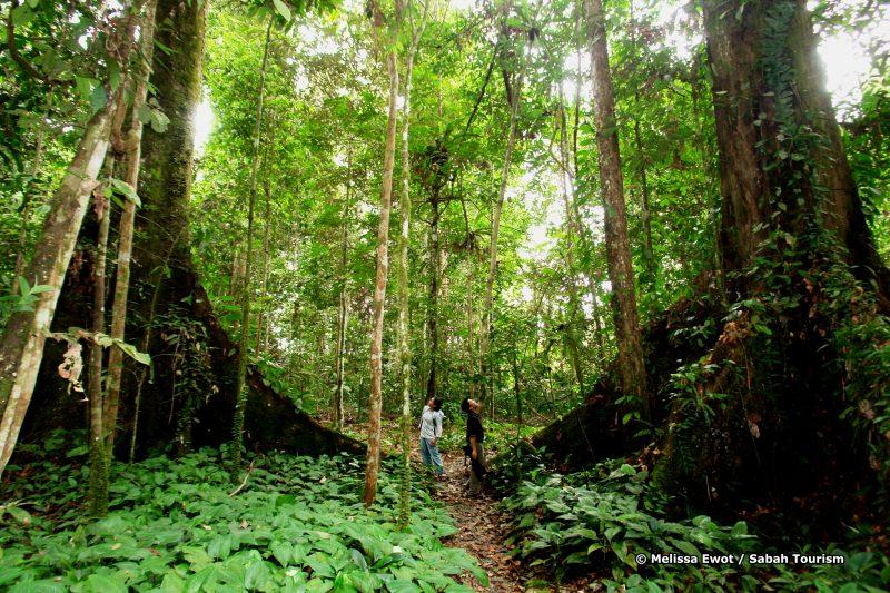 mewot_jungle trekking
