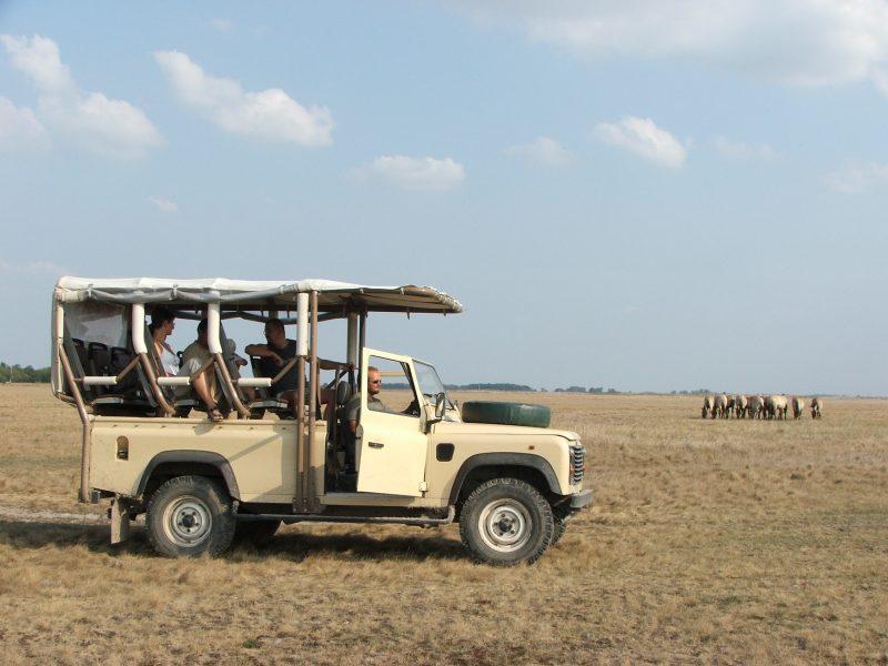 04. Safari Hortobagy
