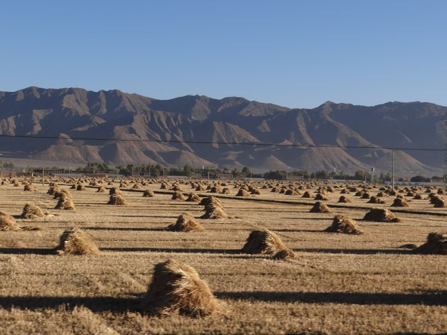 01. Agricultura in Tibet