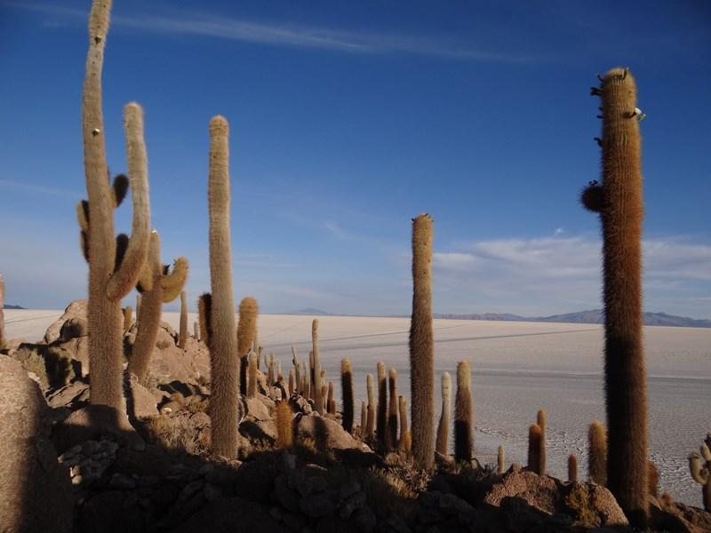 10. Cactusi