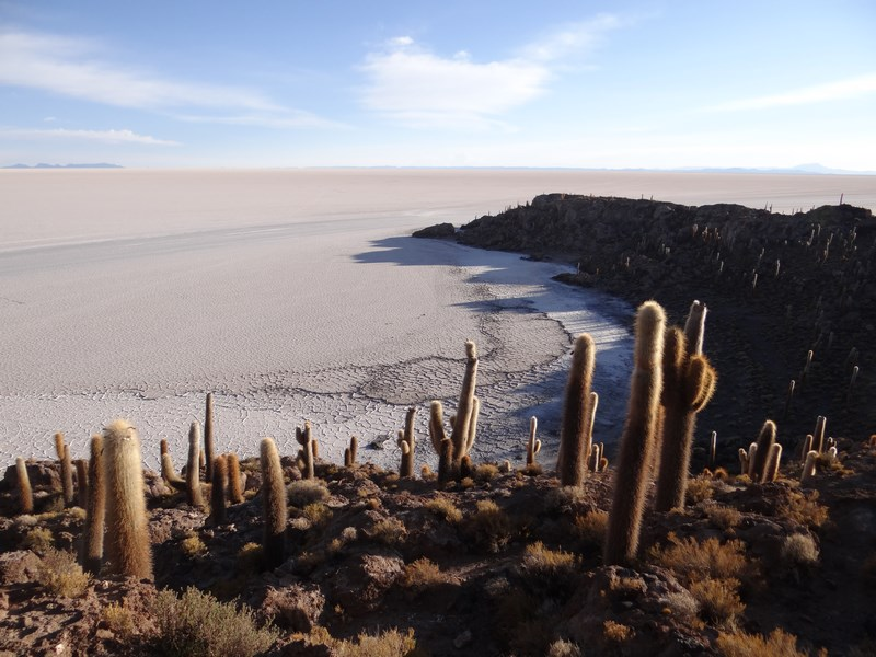 12. Padure de cactusi