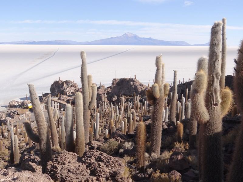 16. Padure de cactusi - Salar de Uyuni