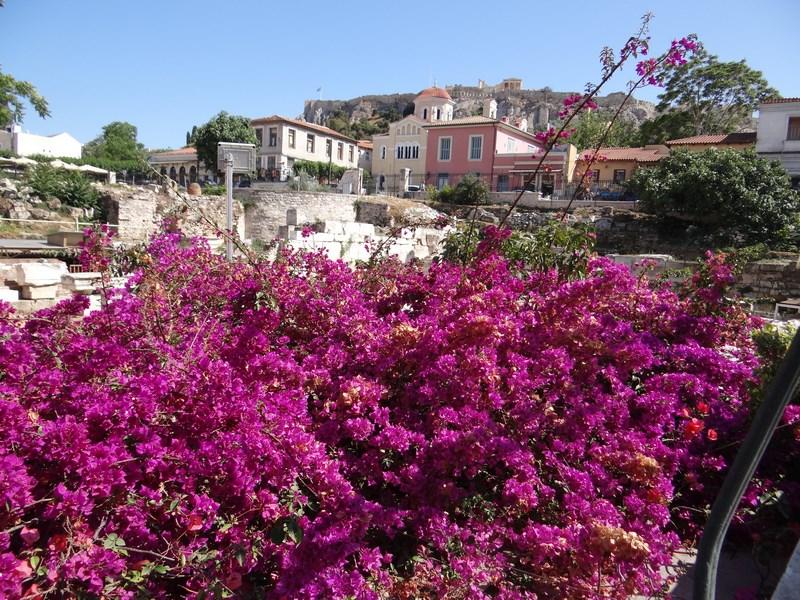 03. Flori in Atena