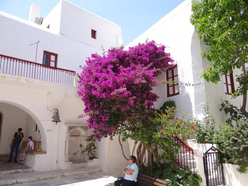 03. Flori in Mykonos