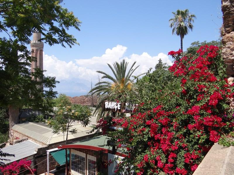 04. Flori in Antalya City
