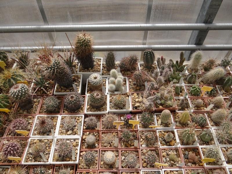 08. Colectie cactusi