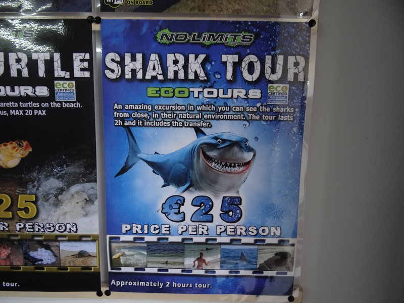 02. Shark Tour - Cape Verde