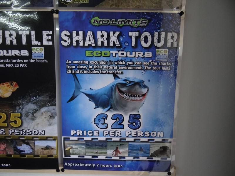 02. Shark Tour - Cape Verde