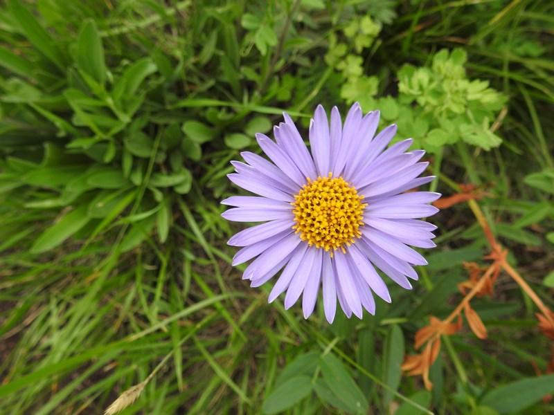 21. Flori de munte