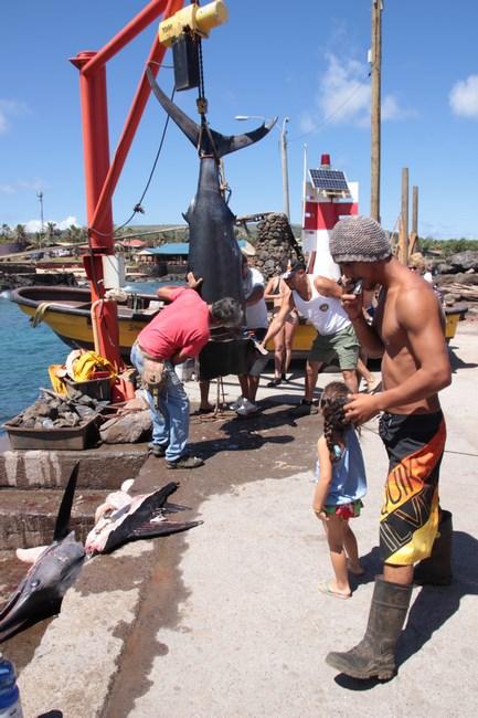 25. Pescari - Insula Pastelui