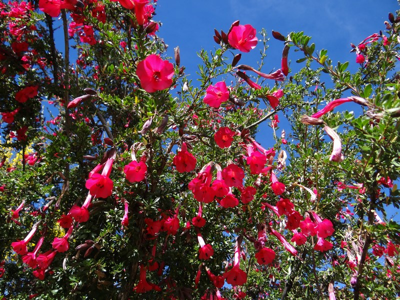 26. Flori Titicaca