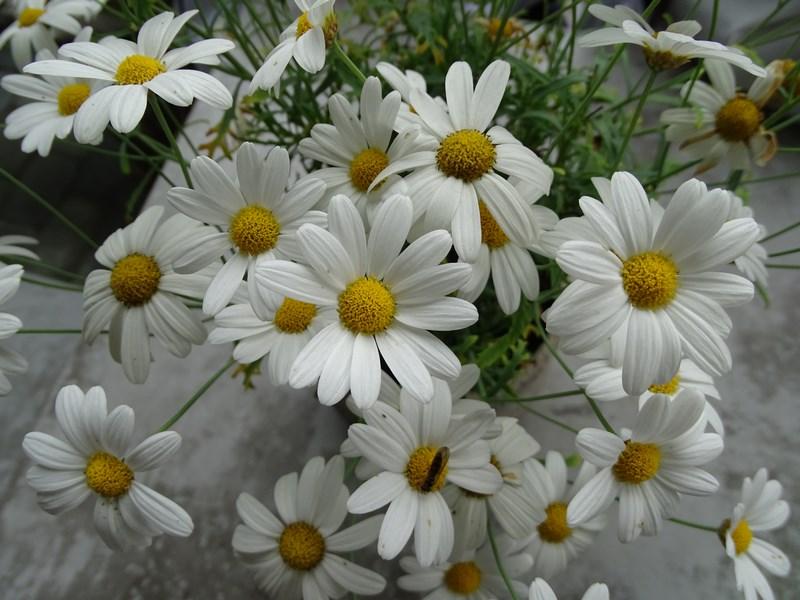 23-flori-norvegiene