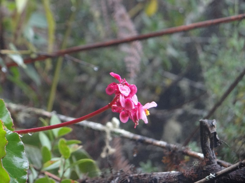 25-orhidee