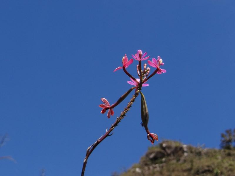 41-orhidee-in-soare