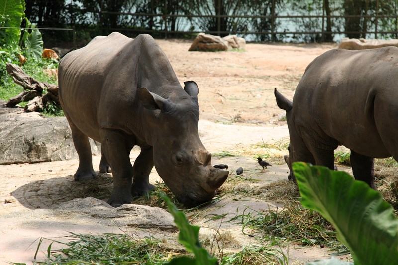 07-rinoceri