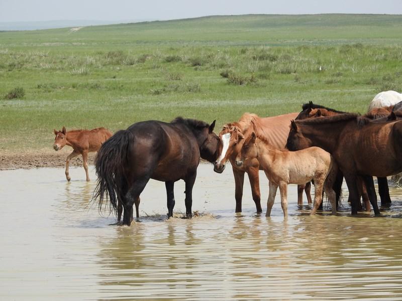 08-cai-mongoli