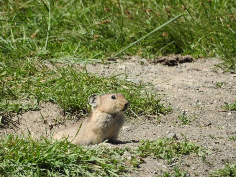 09-marmota