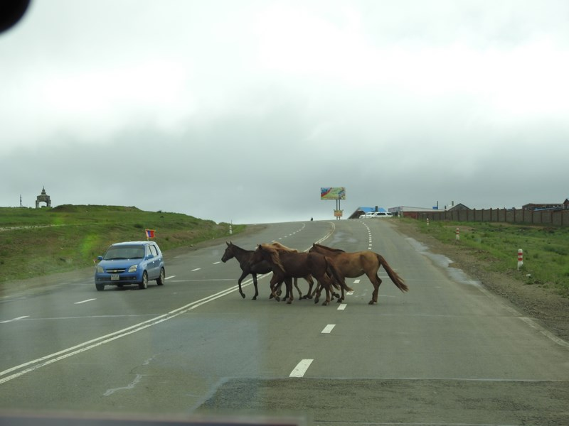 11-cai-mongoli