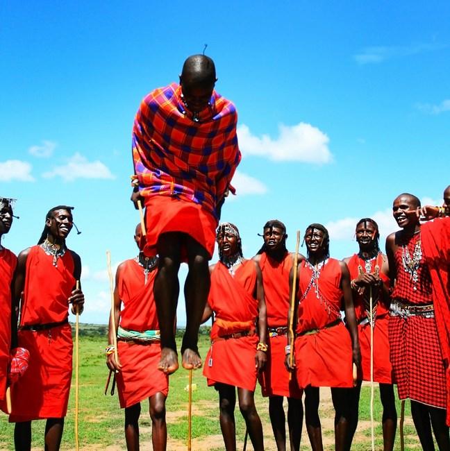 11306306 - african traditional jumps, masai mara warriors dancing, kenya