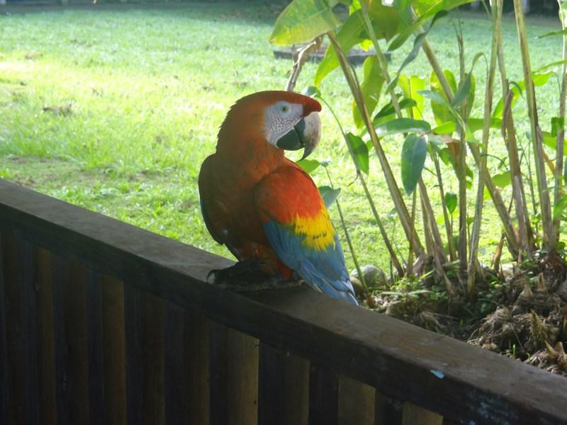03-papagal-costa-rica