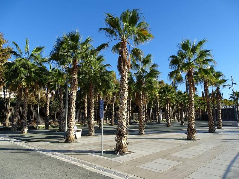 05-palmieri
