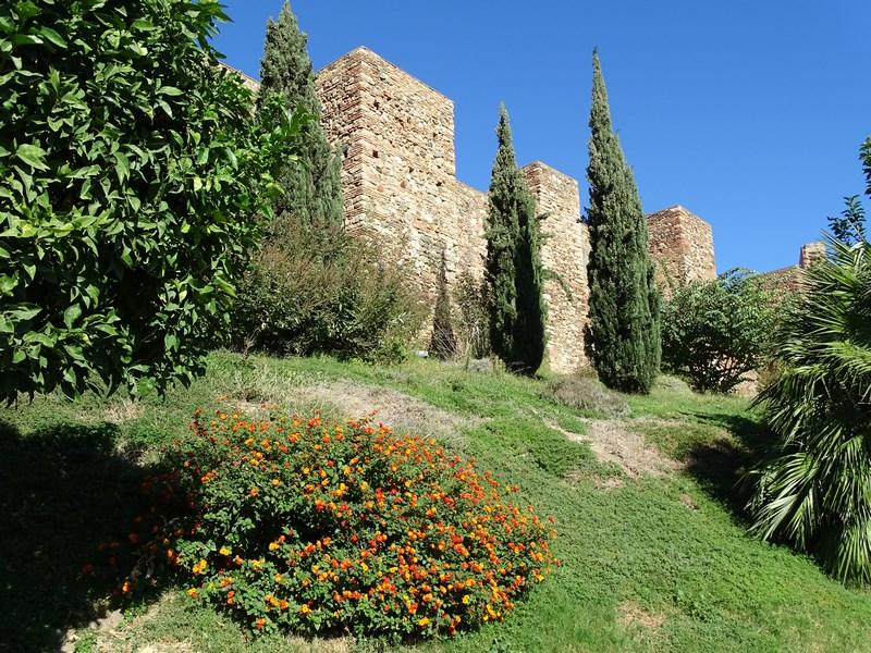10-ziduri-cetate
