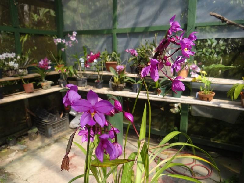 19-orhidee-costa-rica